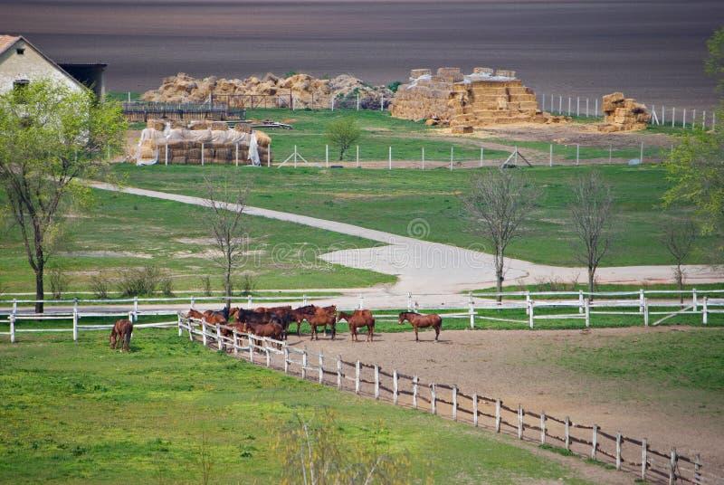 Caballos en una granja imágenes de archivo libres de regalías