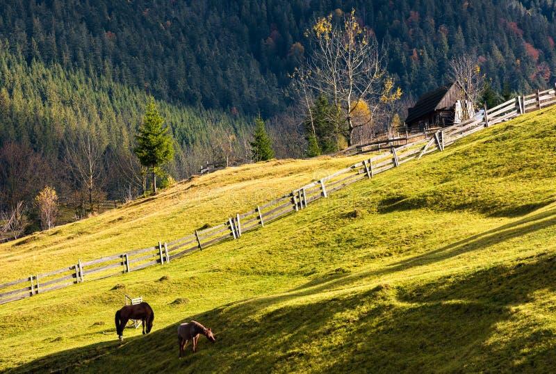 Caballos en una ladera herbosa cerca del pueblo foto de archivo