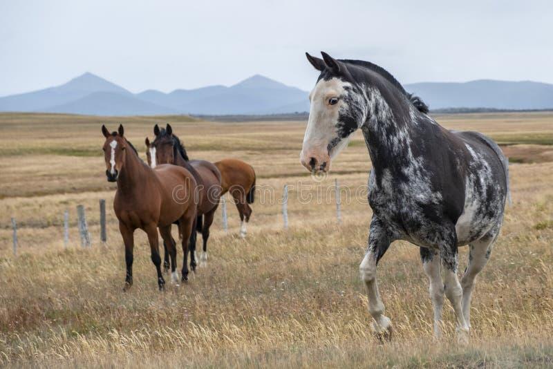 Caballos hermosos en una granja en Patagonia meridional argentina imagenes de archivo
