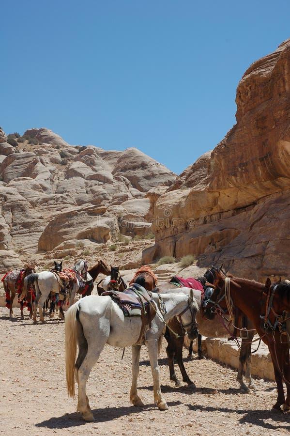 Caballos que esperan a turistas en ruinas de la ciudad antigua del Petra, Jordania foto de archivo libre de regalías