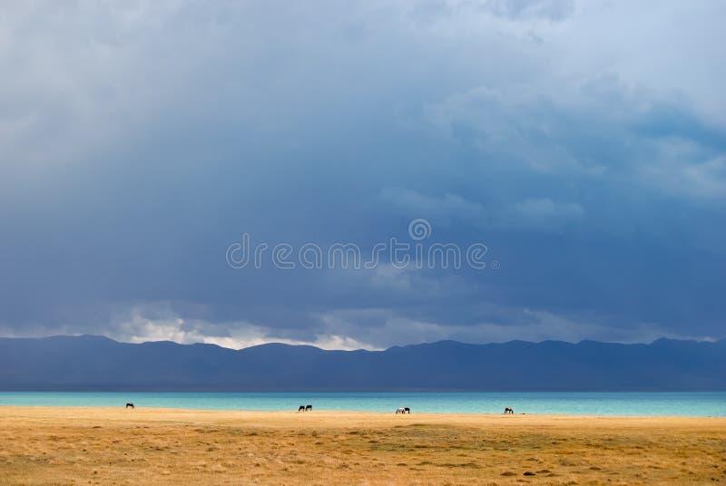 Caballos que introducen a lo largo del lago Canción-Kol foto de archivo