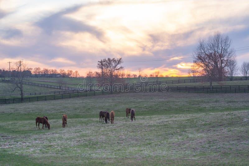 Caballos que pastan adentro en una colina rodante en Kentucky foto de archivo libre de regalías