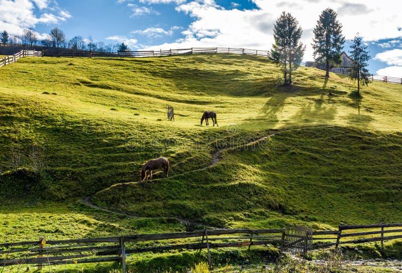 Caballos que pastan en la cuesta gaseosa cerca de los árboles imagenes de archivo