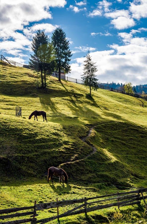 Caballos que pastan en la cuesta gaseosa cerca de los árboles imagen de archivo