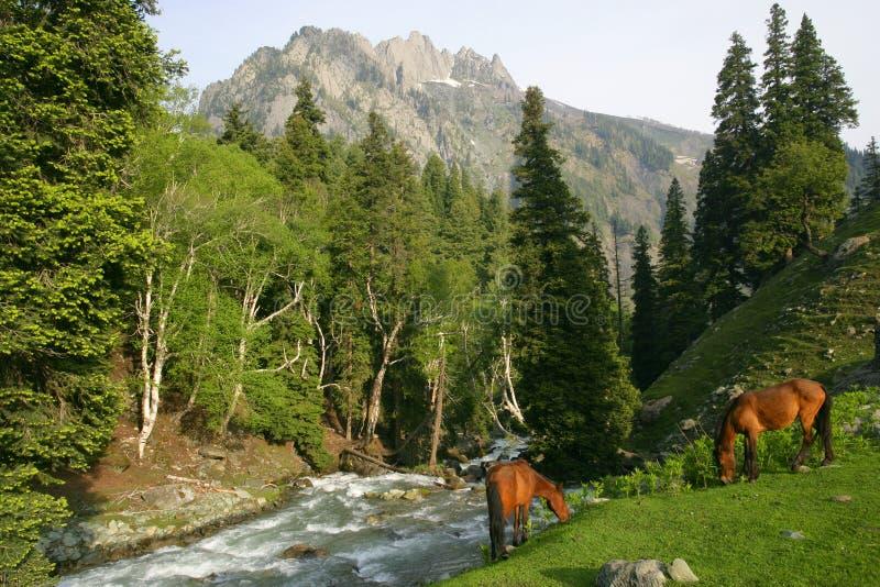 Caballos que pastan en las montañas fotos de archivo libres de regalías