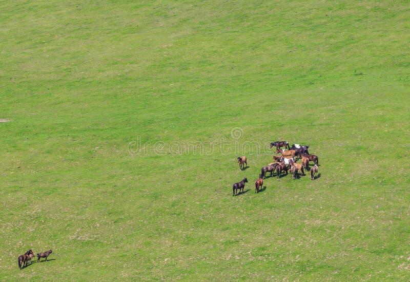 Caballos que pastan en pasto verde imagen de archivo