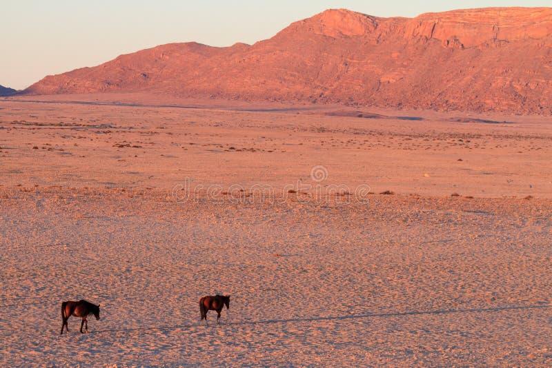 Caballos salvajes de Aus - Namibia foto de archivo