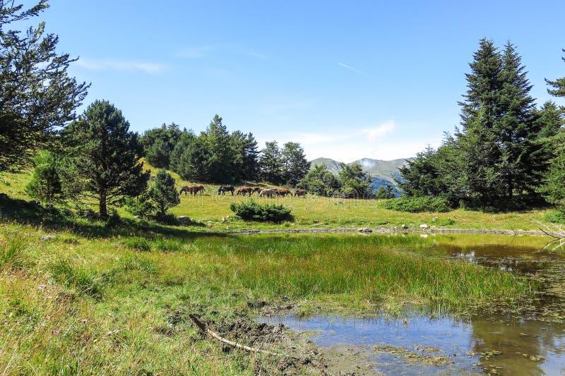 Caballos salvajes en el valle de Aran en los Pirineos catalanes, España imagen de archivo
