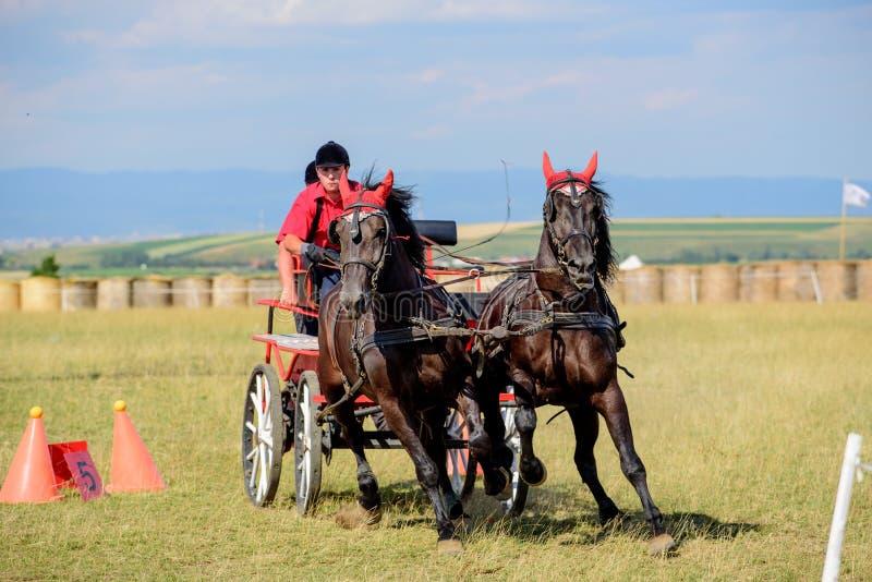 Caballos y carro de Brown en meta en la pista del caballo imagen de archivo