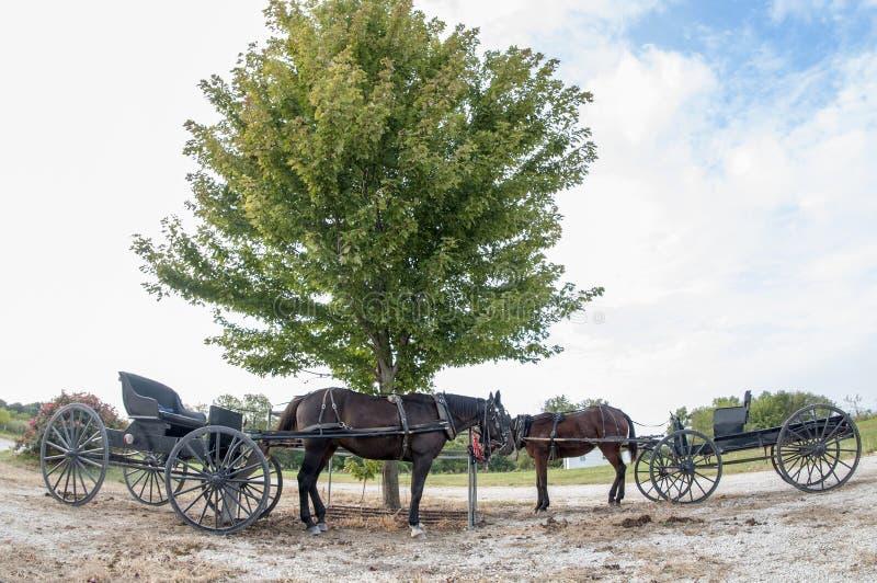 Caballos y cortes de Amish fotografía de archivo libre de regalías