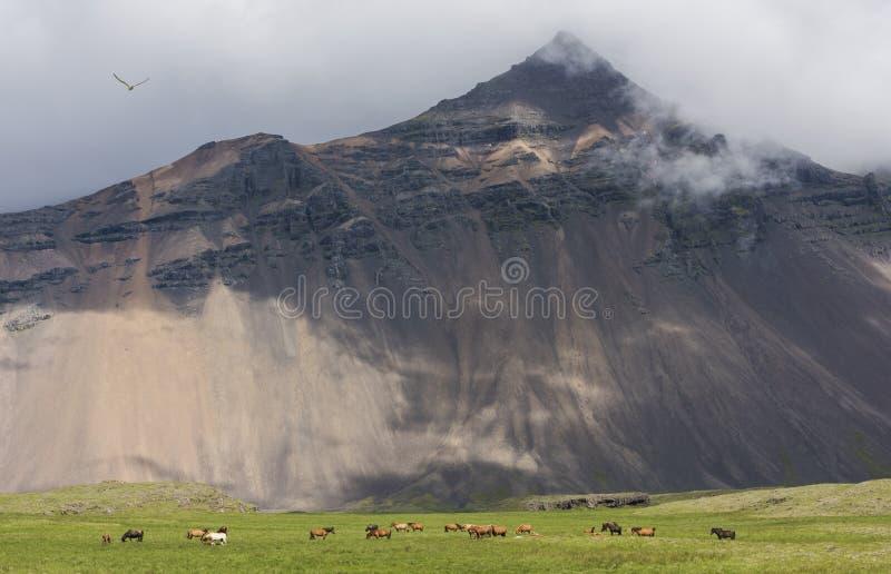 Caballos y montaña islandeses fotos de archivo libres de regalías