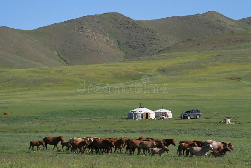 Caballos y yurts en la estepa mongol imagen de archivo
