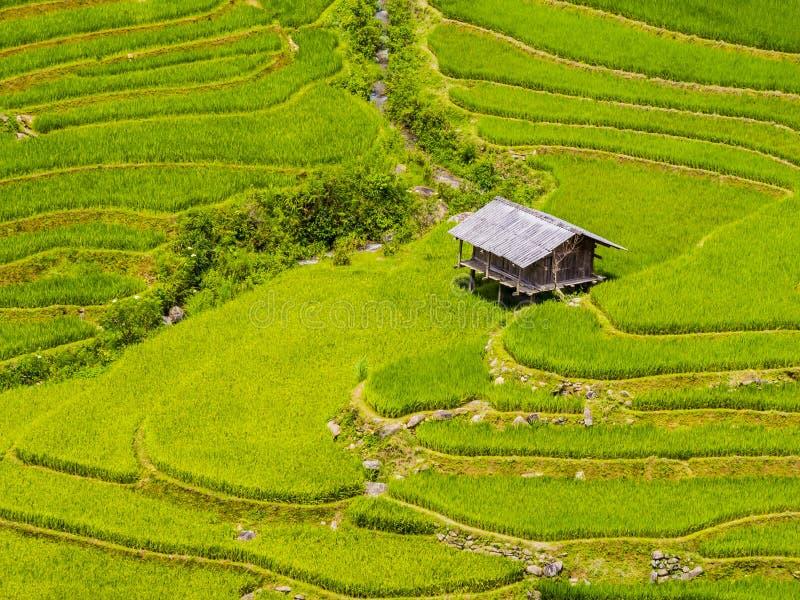 Cabana da exploração agrícola cercada pelo campo terraced verde do arroz, MU Cang Chai, Vietname do norte fotos de stock royalty free