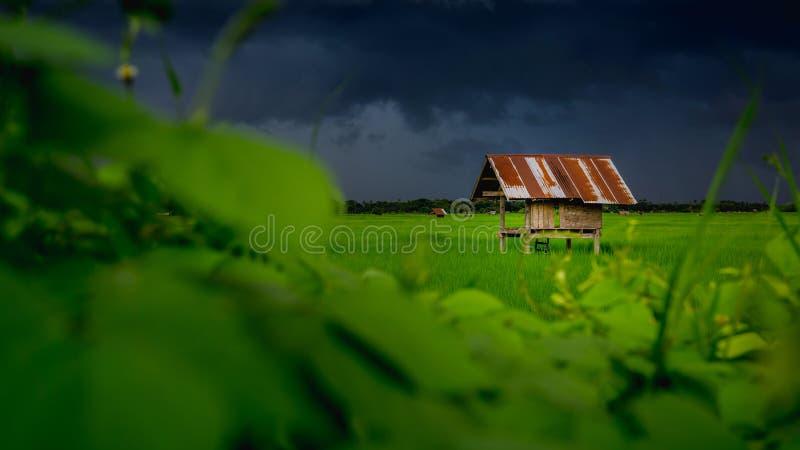 Cabana na terra dos povos no campo Tailândia e no céu Overcast fotografia de stock