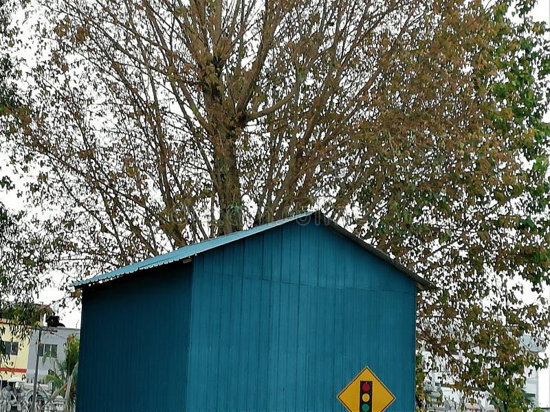 Cabana pequena azul com fundo grande da árvore imagem de stock royalty free