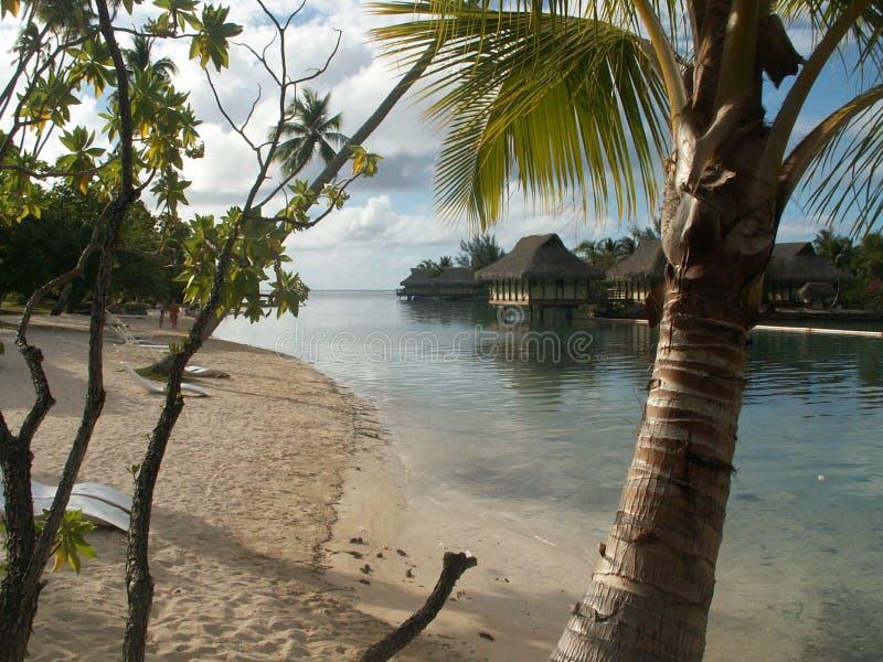 Cabanas da praia de Moorea imagens de stock royalty free