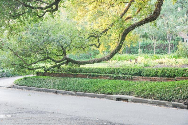 Cabane dans un arbre énorme Houston, le Texas, Etats-Unis de chêne vivant images stock