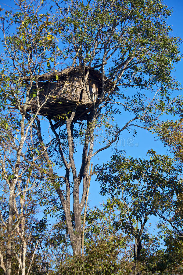 Cabane dans un arbre images stock