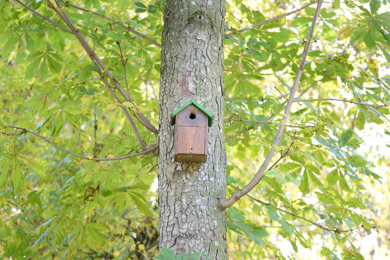 Cabane dans un arbre pour des oiseaux images libres de droits