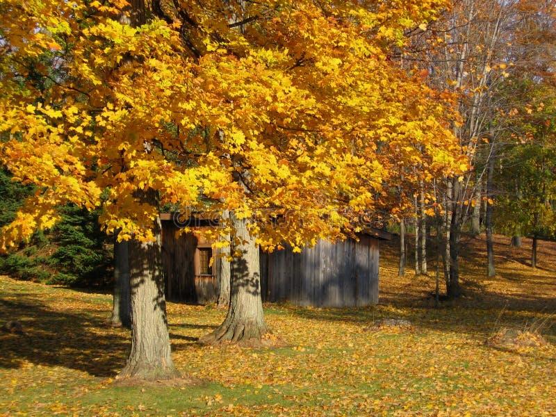 Cabane en bois au milieu des bois avec des couleurs d'or des photos de Chute-actions photo libre de droits