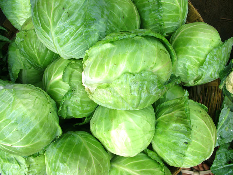 Download Cabbage stock image. Image of nutritious, ripe, stack - 15277175