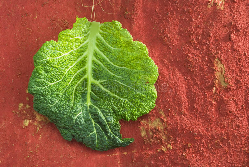 Download Cabbage stock photo. Image of cabbage, nobody, indoors - 28204404