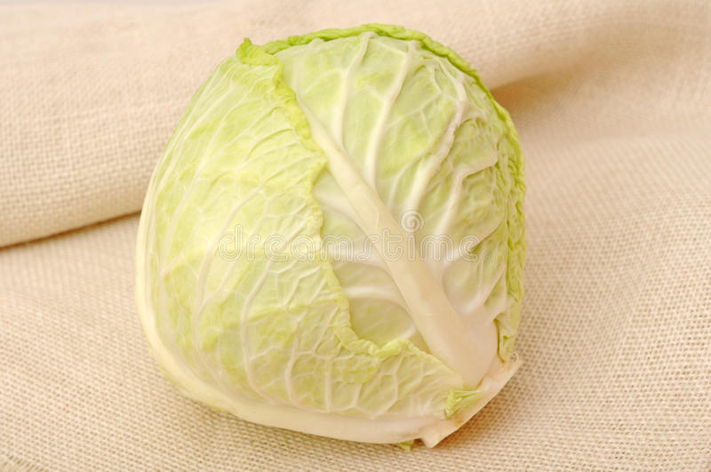 Download Cabbage stock image. Image of background, leave, fresh - 28686919