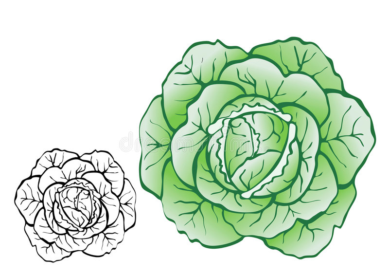Download Cabbage Stock Photos - Image: 3431293