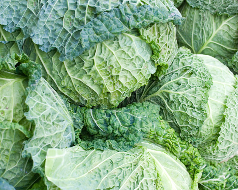 Cabbage. Fresh organic cabbage useful for background royalty free stock image