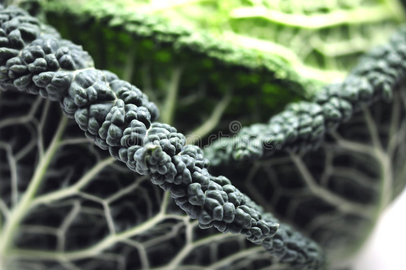 Cabbage close-up royalty free stock photos