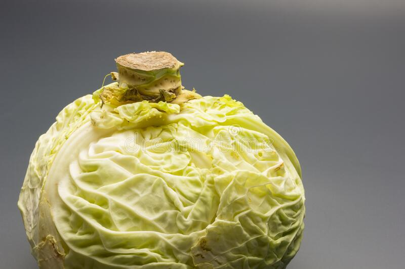 Cabbage, green and healthy winter vegetable. Freshly picked cabbage from the garden, winter vegetable, healthy and ideal for vegetarian meals; winter meals royalty free stock image