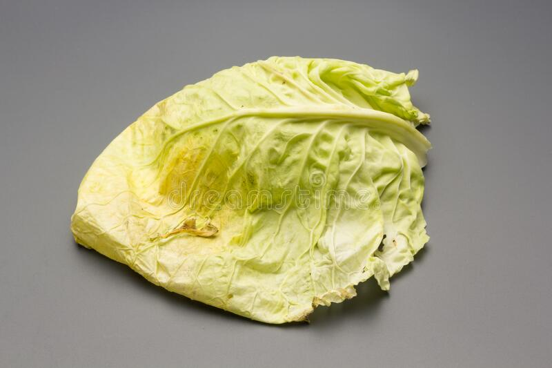 Cabbage, green and healthy winter vegetable. Freshly picked cabbage from the garden, winter vegetable, healthy and ideal for vegetarian meals; winter meals royalty free stock photos