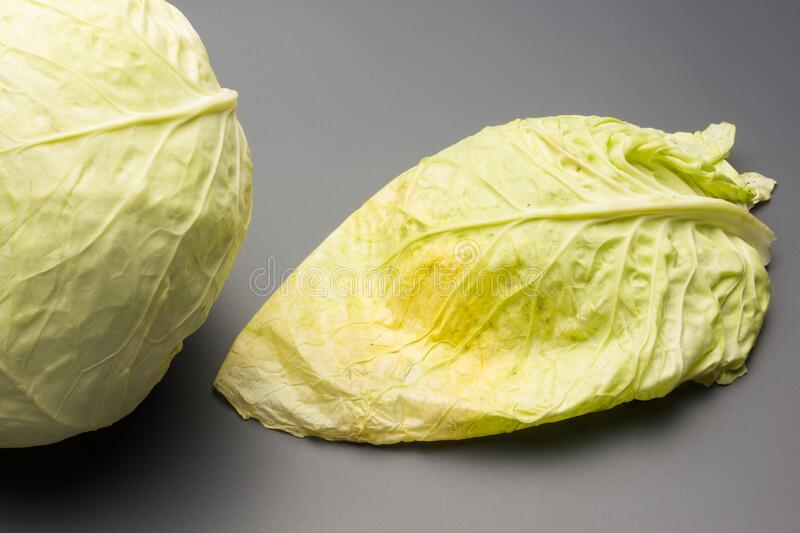 Cabbage, green and healthy winter vegetable. Freshly picked cabbage from the garden, winter vegetable, healthy and ideal for vegetarian meals; winter meals royalty free stock photography