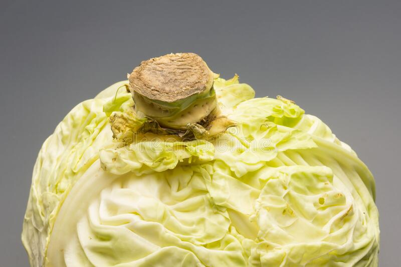 Cabbage, green and healthy winter vegetable. Freshly picked cabbage from the garden, winter vegetable, healthy and ideal for vegetarian meals; winter meals royalty free stock images