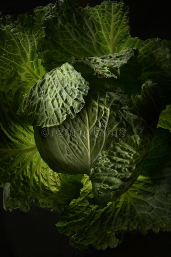 Cabbage Leaves stock photos