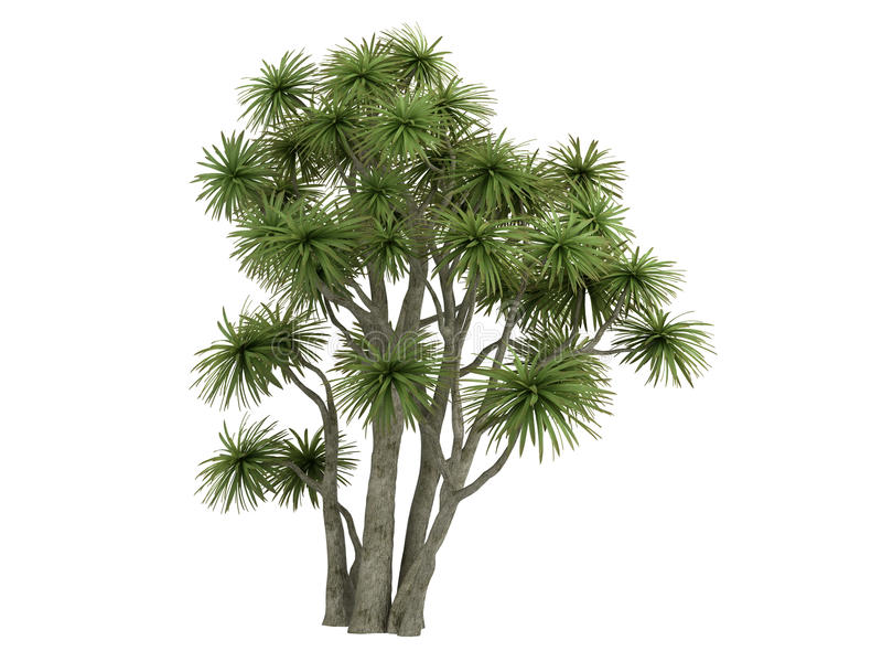 Cabbage_Palm_ (Cordyline australis) libre illustration