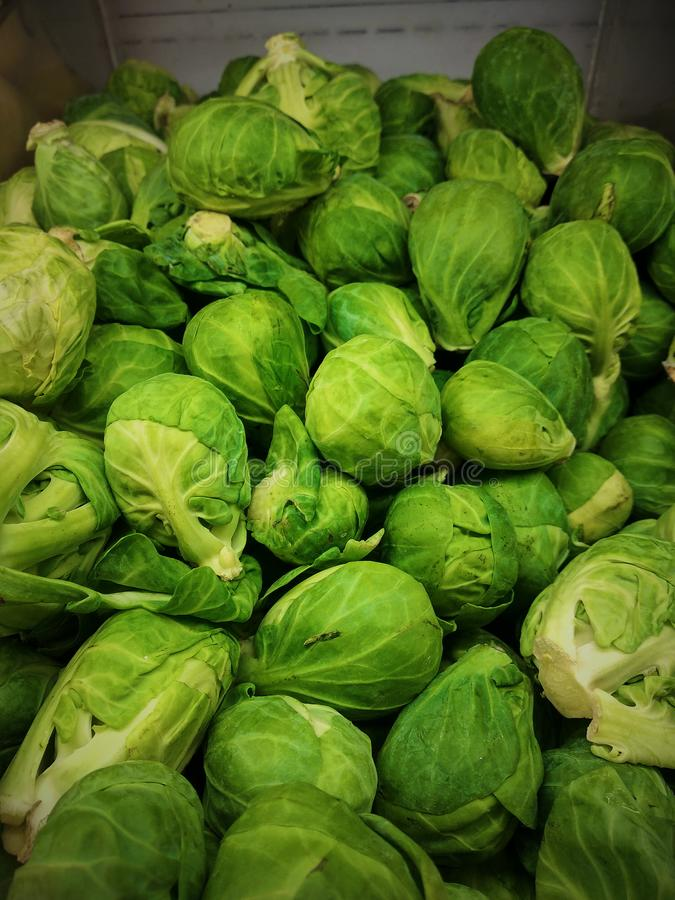 Cabbage Sprouts royalty free stock images