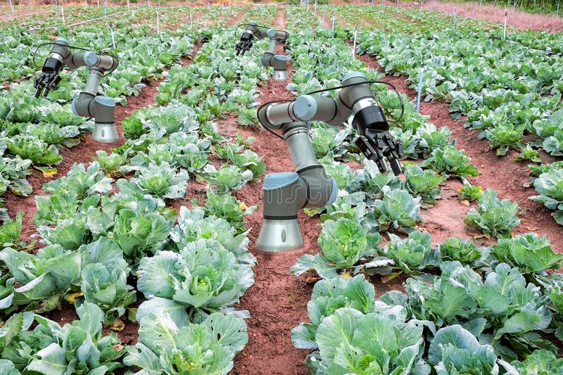 Smart Farming 4.0 and Industry 4.0, innovation concept idea. royalty free stock photos