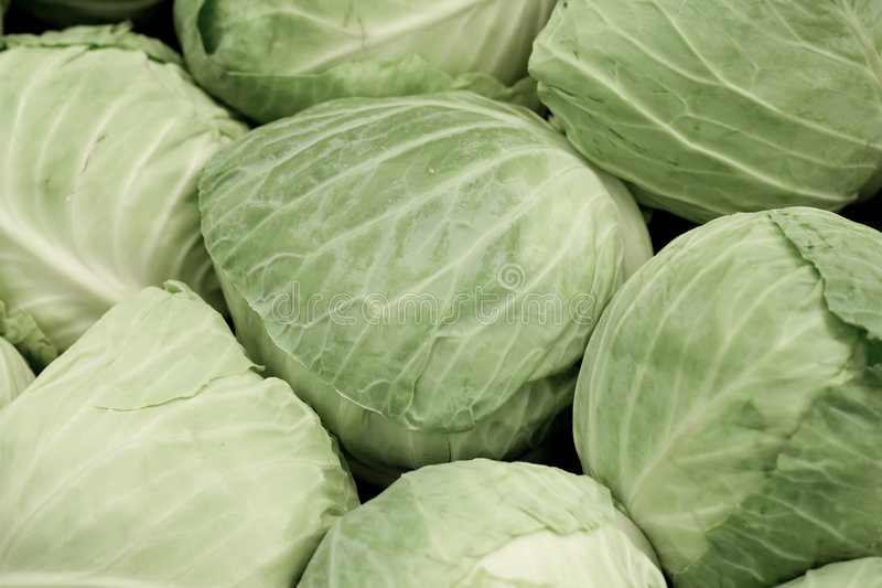 Download Cabbages Royalty Free Stock Image - Image: 2310376
