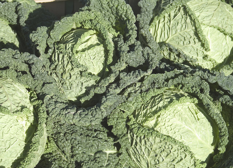 Download Cabbages (savoy type) stock photo. Image of fresh, agricultural - 22206
