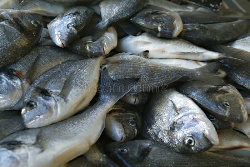 Cabeça da brema de mar no mercado imagem de stock
