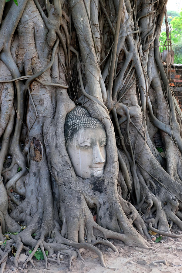 Cabeça da Buda fotos de stock