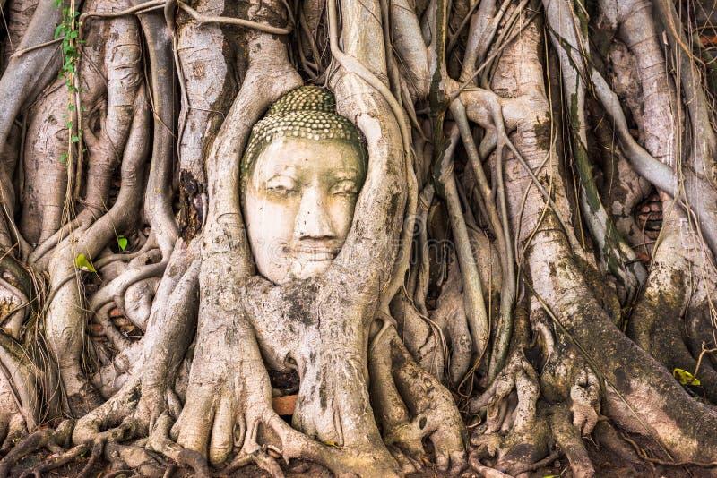 Cabeça da Buda de Ayutthaya fotos de stock
