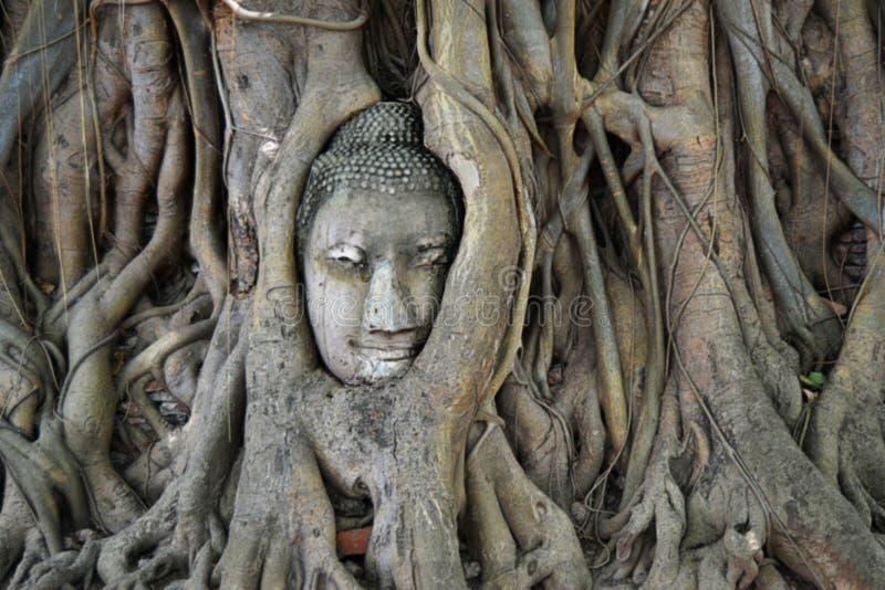 Cabeça da Buda na árvore de Ayutthaya, Tailândia fotografia de stock royalty free