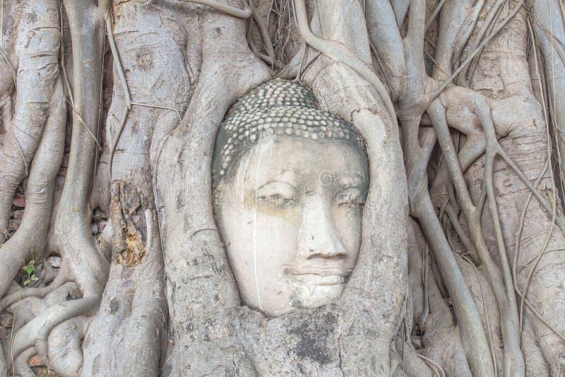 A cabeça da Buda nas raizes da árvore fotos de stock
