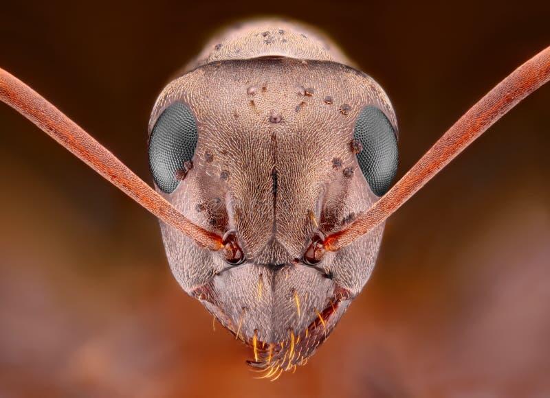 Cabeça da formiga com algumas meio espinhas   imagens de stock royalty free