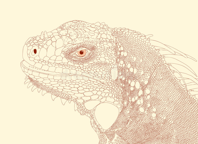 Cabeça da iguana ilustração do vetor
