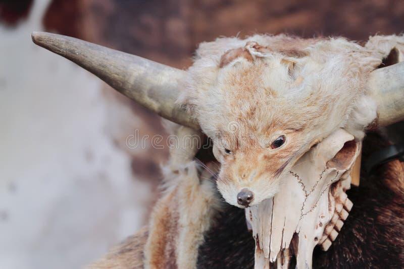 Cabeça da pele e da raposa fotos de stock