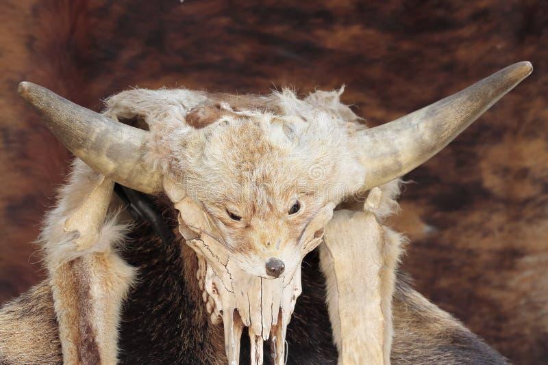 Cabeça da pele e da raposa imagem de stock