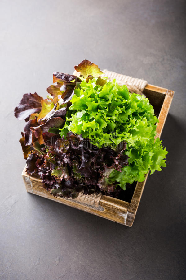 Cabeça da salada orgânica fresca da alface imagem de stock
